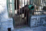 One sad and lonely bear at the game park for big animals found in Romania