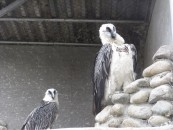 Birds at farm 2
