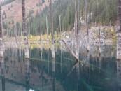 Lake Kaindy pines