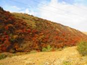Autumn colours, leaving Saty